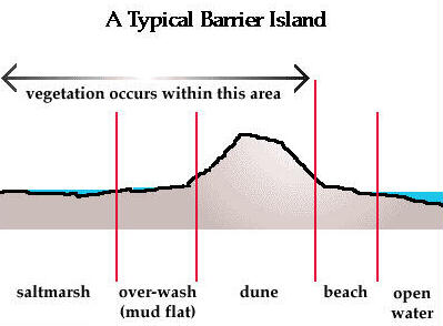 A Typical Barrier Lsland
