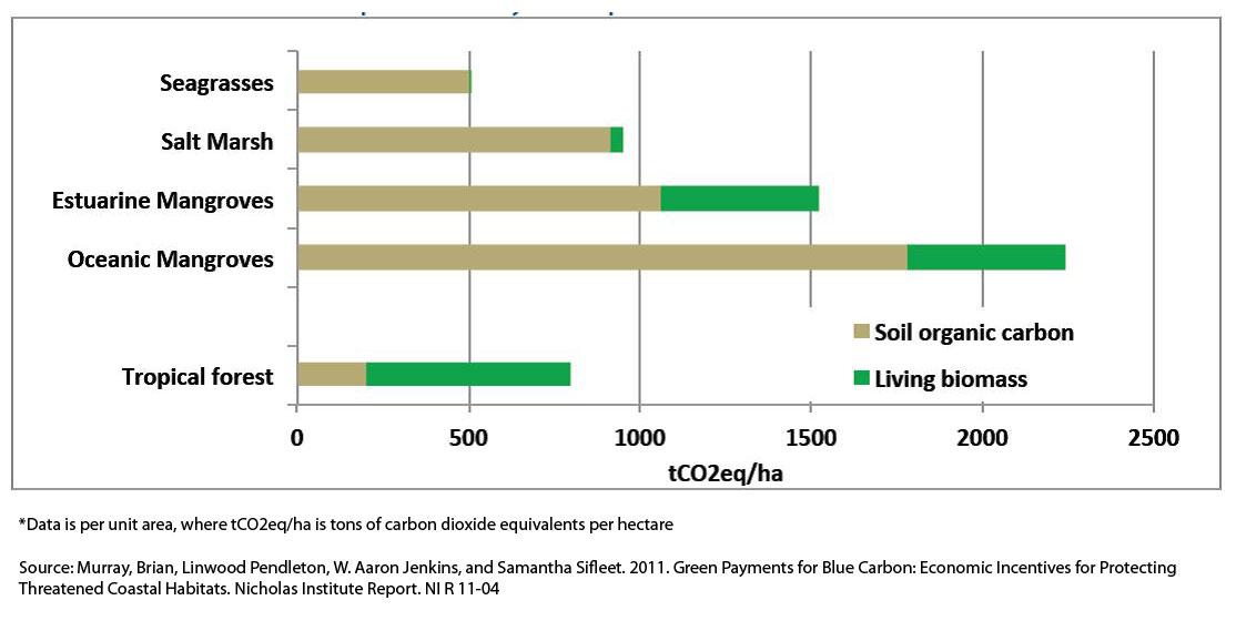 Carbon Storage Abilities of Different Habitat Types