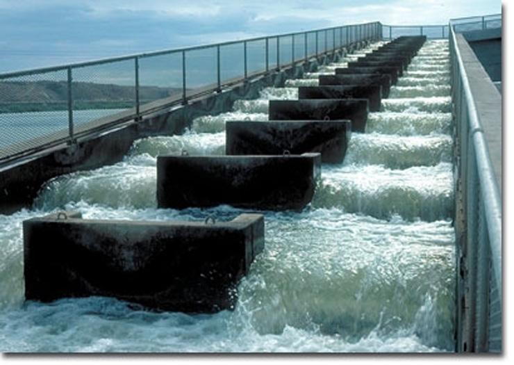 Noaa habitat conservation fish passage for Dam fish count