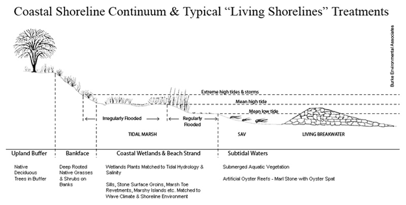 Living Shoreline Planning And