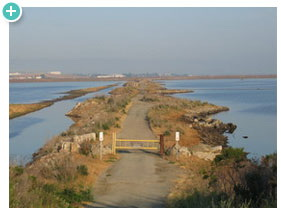 Removing levees on salt ponds in San Francisco Bay to restore salt marsh habitat for fish and wildlife