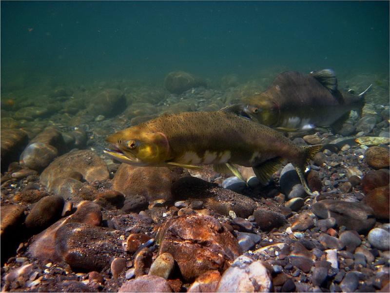 NOAA Habitat Conservation   Featured Habitat of the Month