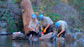 Volunteers install woody debris in Austin Creek near the Russian River in California