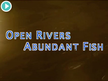 Open Rivers, Abundant Fish