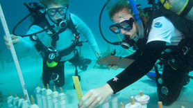 NOAA employees conducting coral restoration